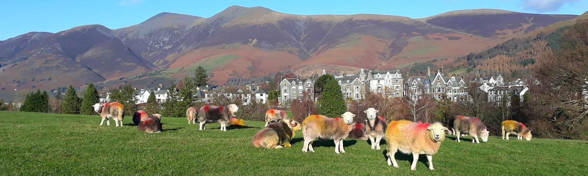 Keswick and Skiddaw. Photo by Pete Royall
